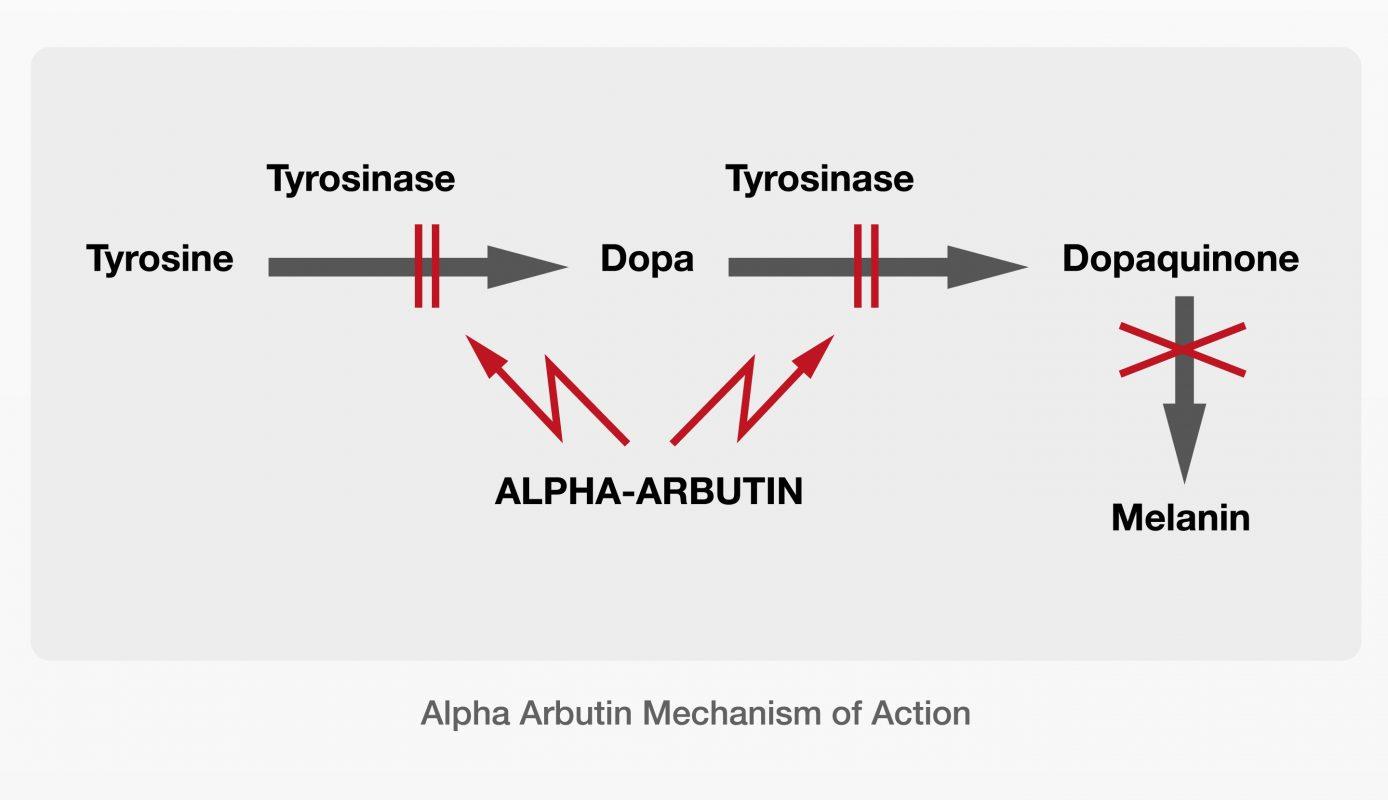 AlphaArbutin-Detailing-Aid